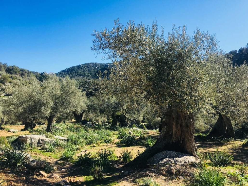 Landgueter-auf-Mallorca-www.kirsten-lehmkuhl.com